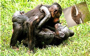 lezbiyen_maymunlarin